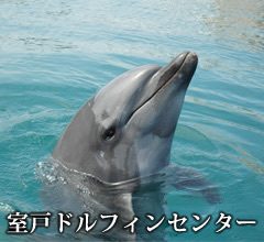 Muroto Dolphins Center